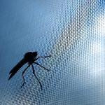 Fensterservice Ostschweiz Insektenschutz Insektengitter