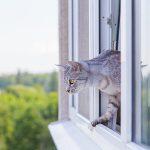 Fensterservice Ostschweiz Katzenschleuse Katzentor Katzentüre